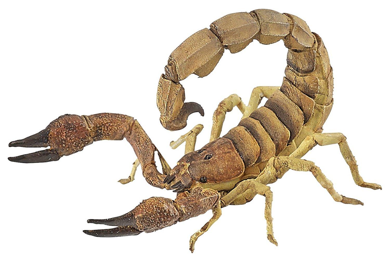 описывает скорпион фото рисунок нас собраны