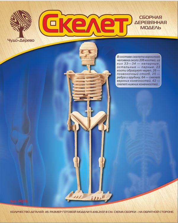 Модель деревянная сборная - Скелет человека, 3 пластиныПазлы объёмные 3D<br>Модель деревянная сборная - Скелет человека, 3 пластины<br>