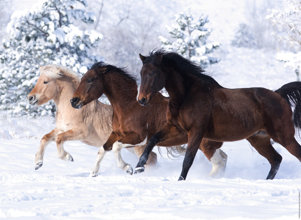 Паззл «Галопом по снегу» 500 штПазлы Ravensburger<br>Паззл «Галопом по снегу» 500 шт<br>