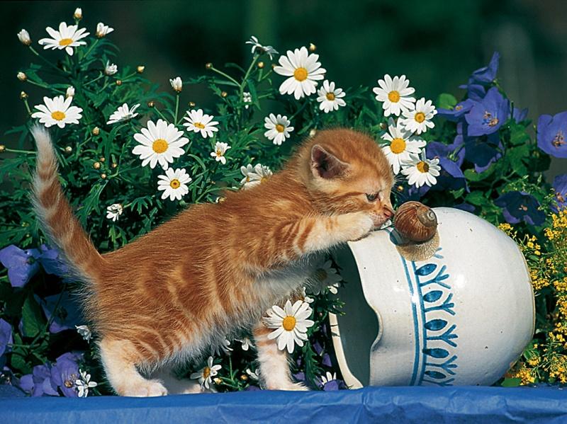 Паззл «Любопытный котенок» 500 штПазлы Ravensburger<br>Паззл «Любопытный котенок» 500 шт<br>