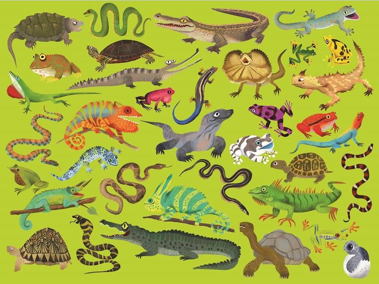 Купить Пазл - Рептилии и Земноводные из серии 36 Животных, 300 деталей, Crocodile Creek