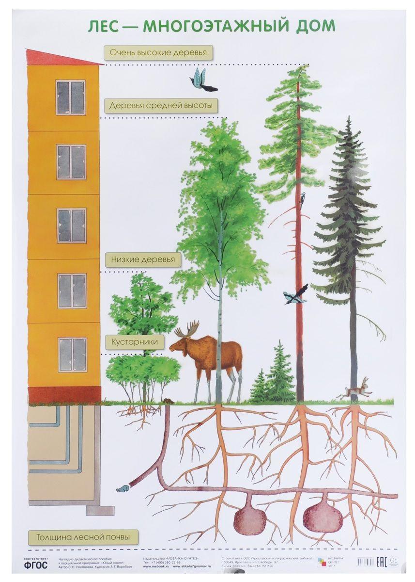 Плакат Николаева С. Н. - Лес — многоэтажный домРазвивающие пособия и умные карточки<br>Плакат Николаева С. Н. - Лес — многоэтажный дом<br>