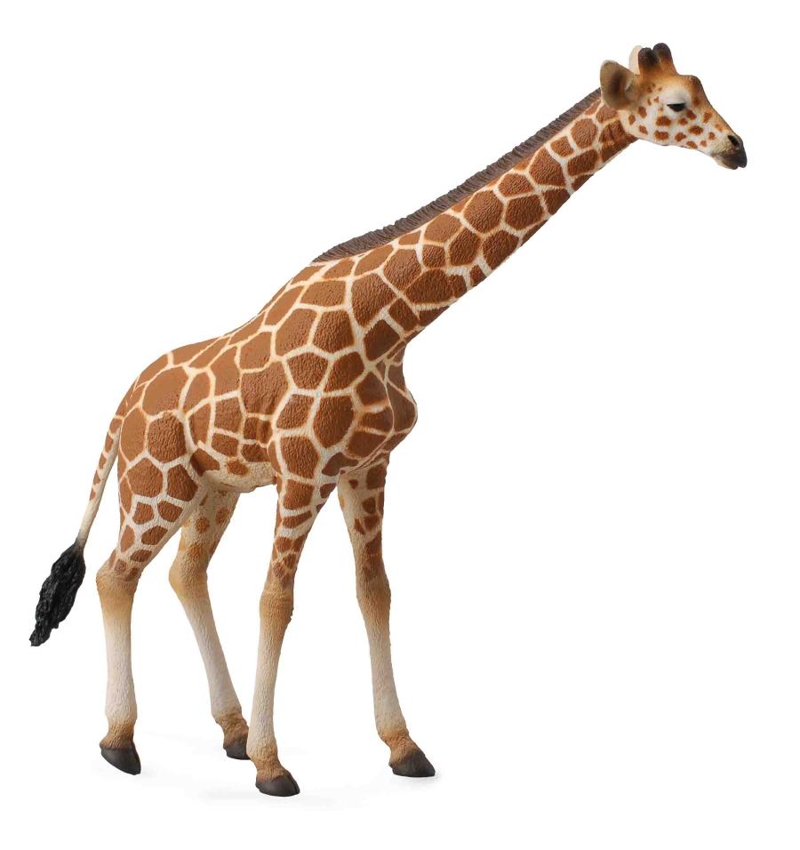 Сетчатый жирафДикая природа (Wildlife)<br>Сетчатый жираф<br>