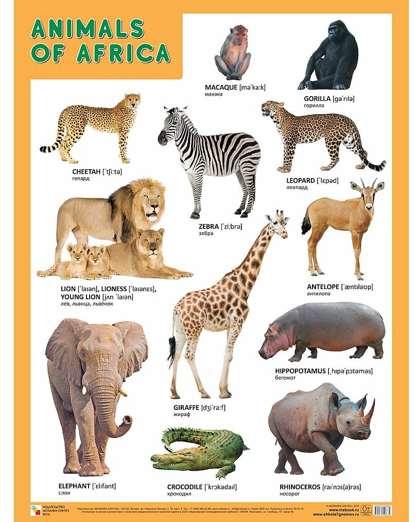 Плакат английский Animals of Africa - Животные АфрикиАнглийский язык для детей<br>Плакат английский Animals of Africa - Животные Африки<br>
