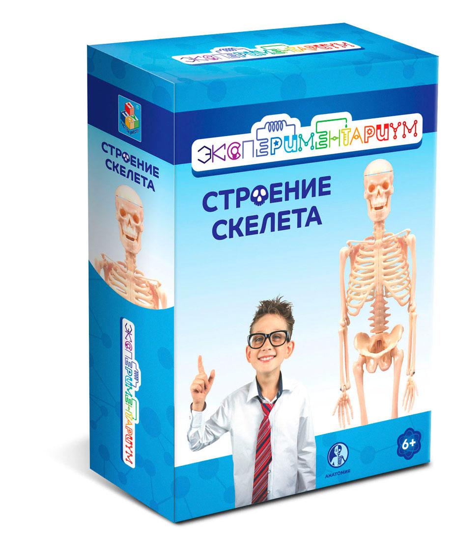 Набор Строение скелета из серии Экспериментариум 1TOY