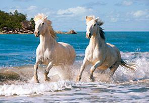 Пазл Castorland 1000 деталей Белая лошадьПазлы 1000 элементов<br>Пазл Castorland 1000 деталей Белая лошадь<br>