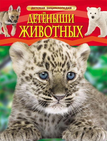 Росмэн Книга «Детеныши животных»