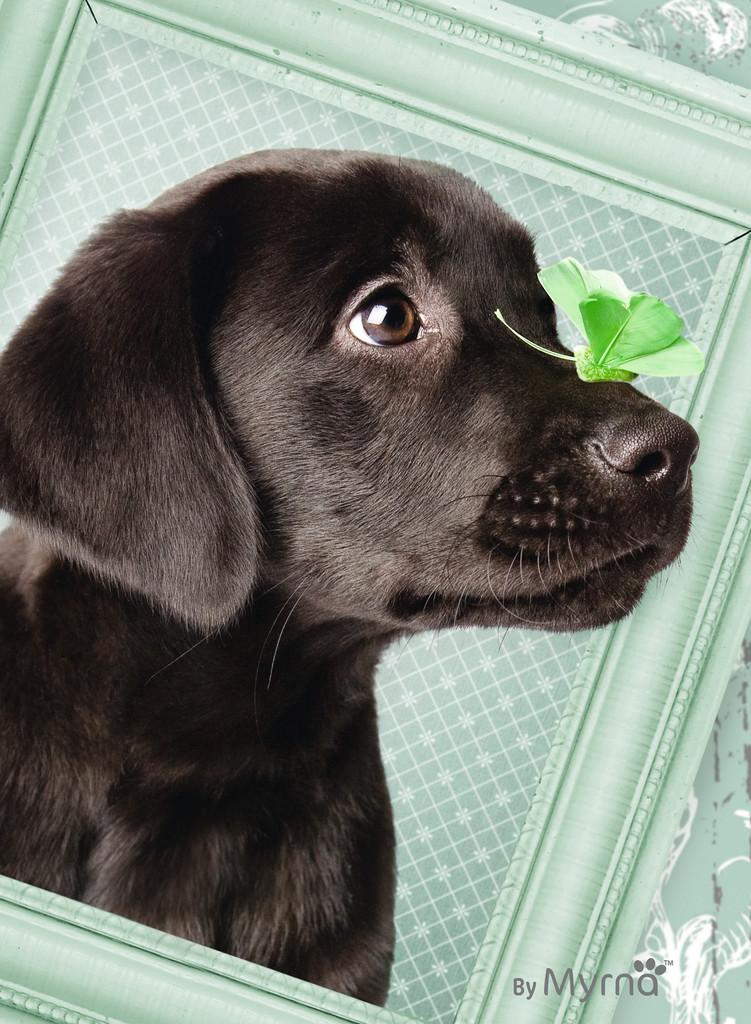 Паззл «Счастливый щенок» 500 шт Ravensburger