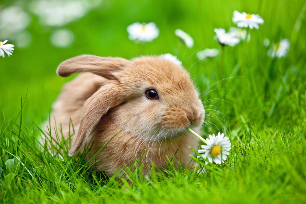 Паззл «Кролик в ромашках» 150 шт