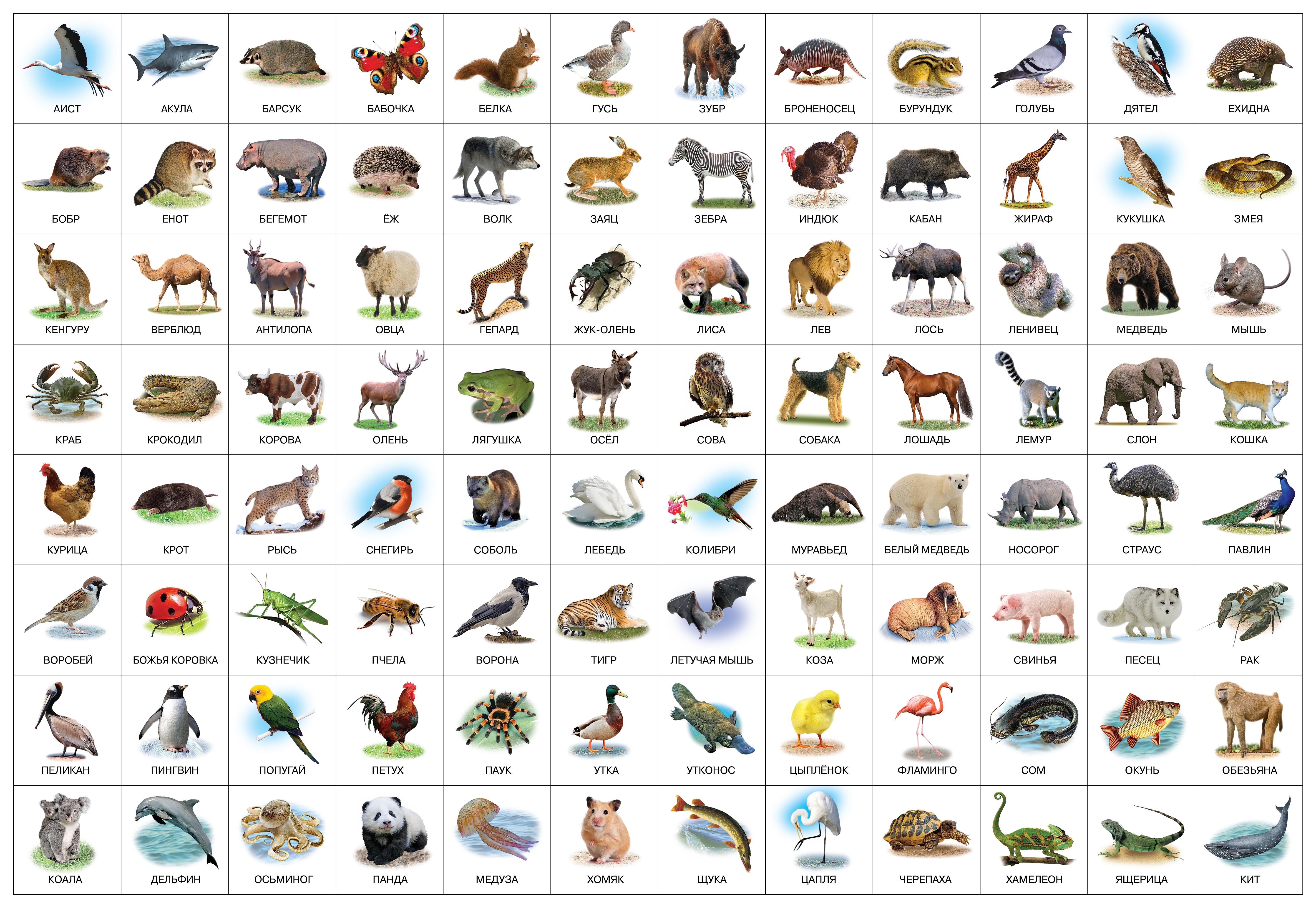 Животные в картинках для детей распечатать, виртуальной