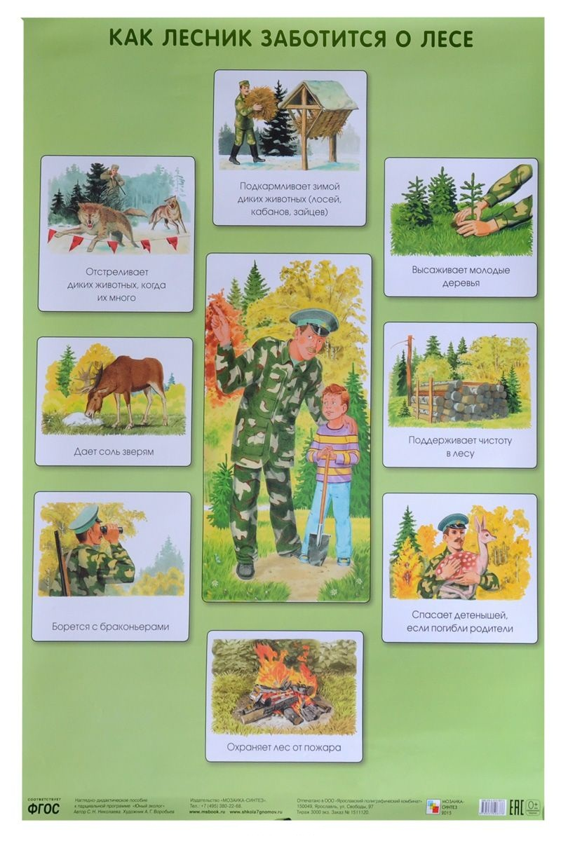 Плакат Николаева С. Н. - Как лесник заботится о лесеРазвивающие пособия и умные карточки<br>Плакат Николаева С. Н. - Как лесник заботится о лесе<br>
