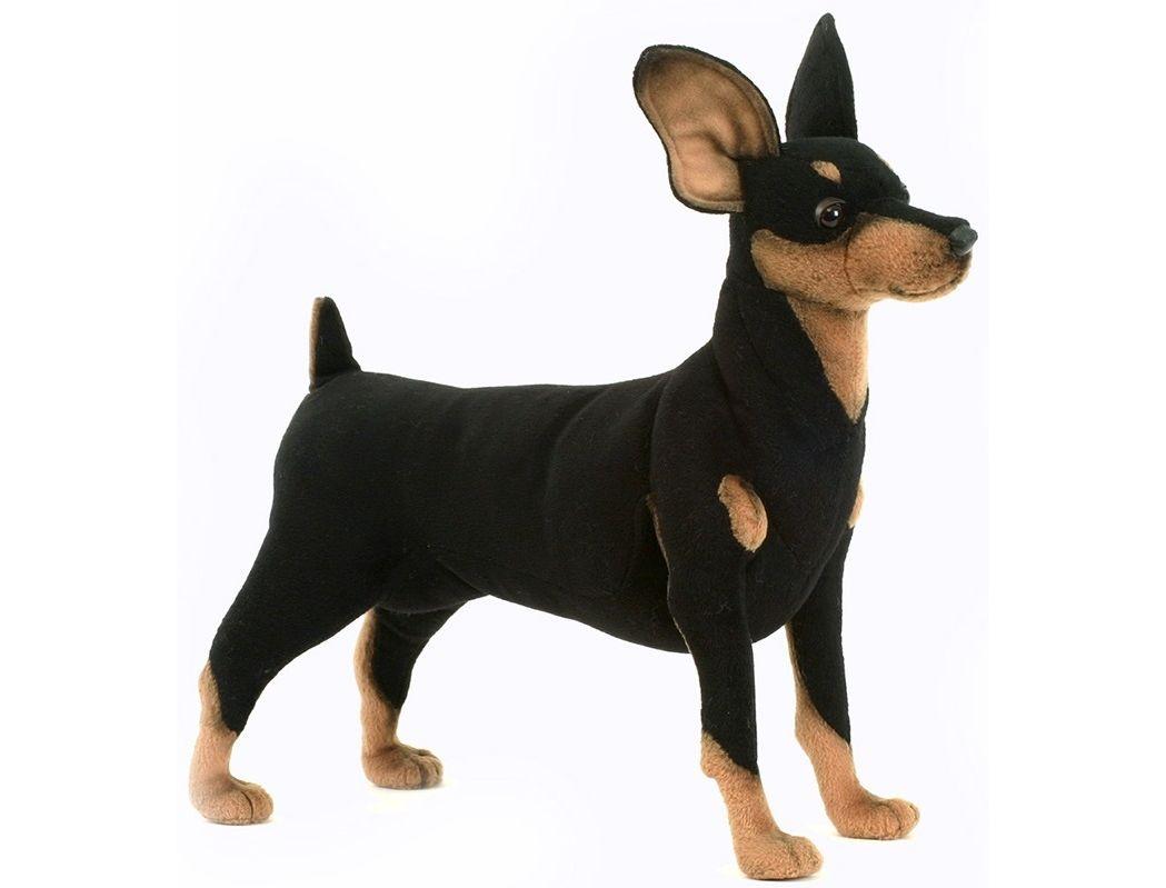 Купить Мягкая игрушка – Собака породы цвергпинчер, 43 см, Hansa