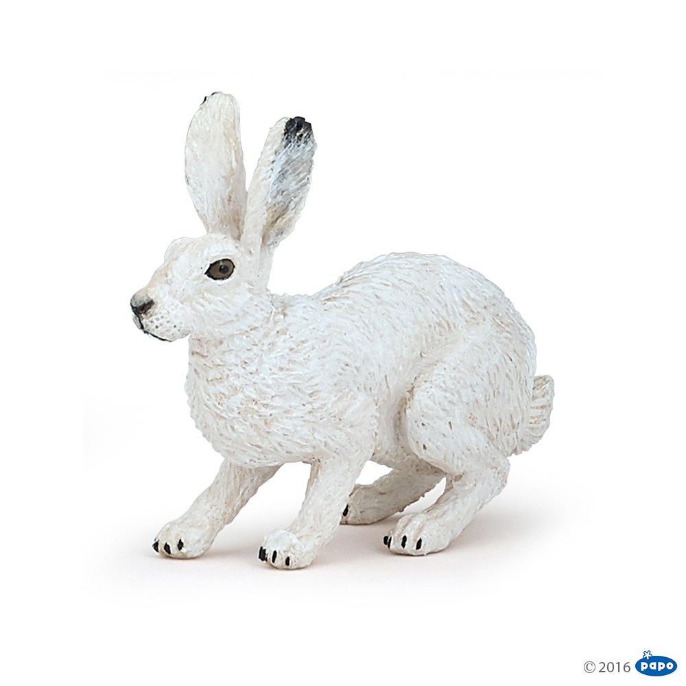 Полярный заяц фото