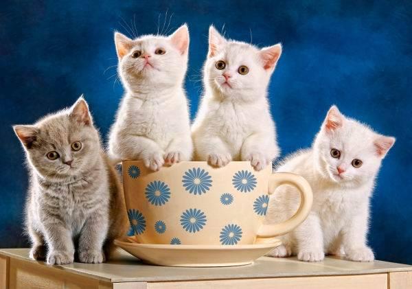 Купить Пазл Castorland 500 деталей, 4 котенка