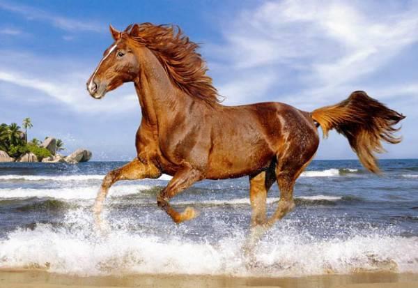 Пазл Castorland 500 деталей, ЛошадьПазлы<br>Пазл Castorland 500 деталей, Лошадь<br>