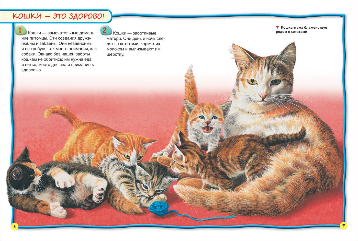 Картинка Кошка С Котятами Для Детского Сада