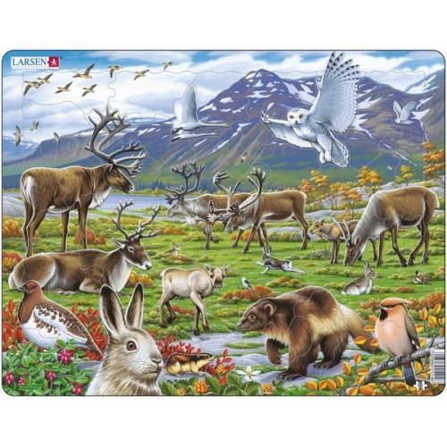 Купить Пазл – Арктика, 50 деталей, Larsen