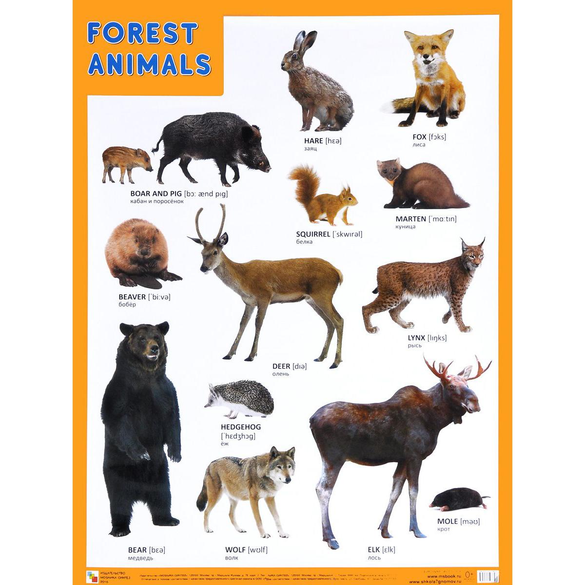 Плакат английский Forest Animals - Лесные обитателиАнглийский язык для детей<br>Плакат английский Forest Animals - Лесные обитатели<br>