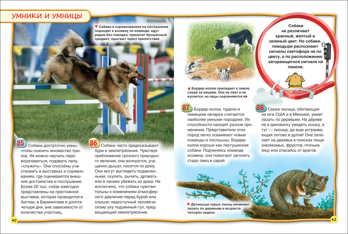 Чем собаки напоминают детей и как манипулируют людьми. Ученые ... | 943x1400