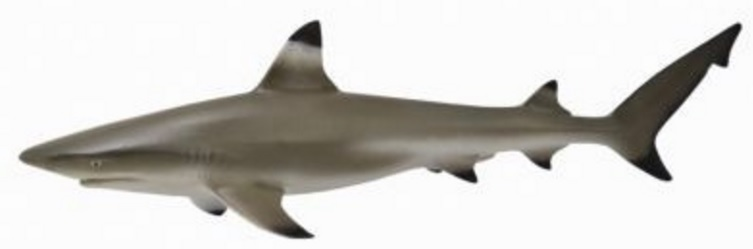 Игровая фигурка - Рифовая акула, размер MМорской мир (Sea life)<br>Игровая фигурка - Рифовая акула, размер M<br>