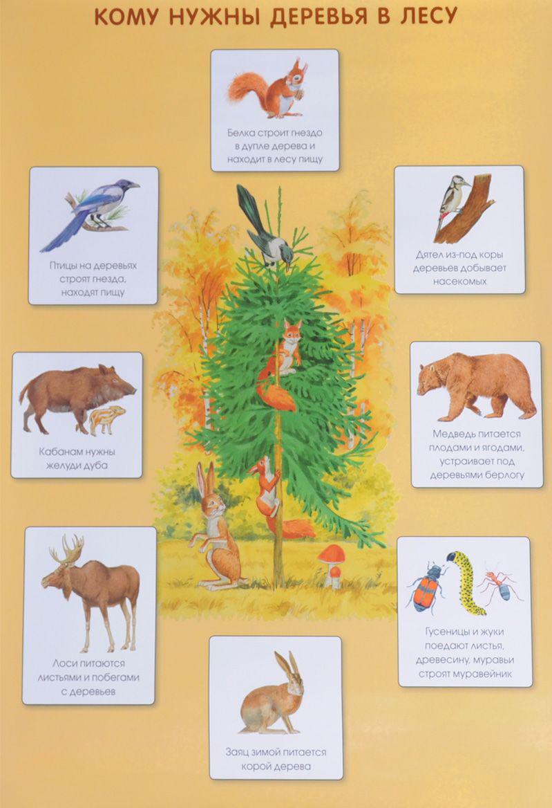 Плакат - Кому нужны деревья в лесуГоворящие плакаты<br>Плакат - Кому нужны деревья в лесу<br>