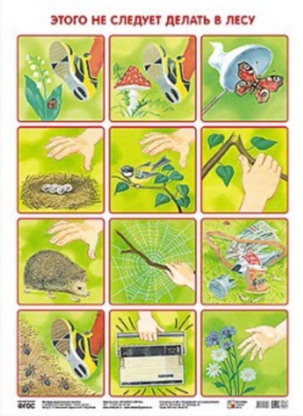 Плакат Николаева С. Н. - Этого не следует делать в лесуРазвивающие пособия и умные карточки<br>Плакат Николаева С. Н. - Этого не следует делать в лесу<br>