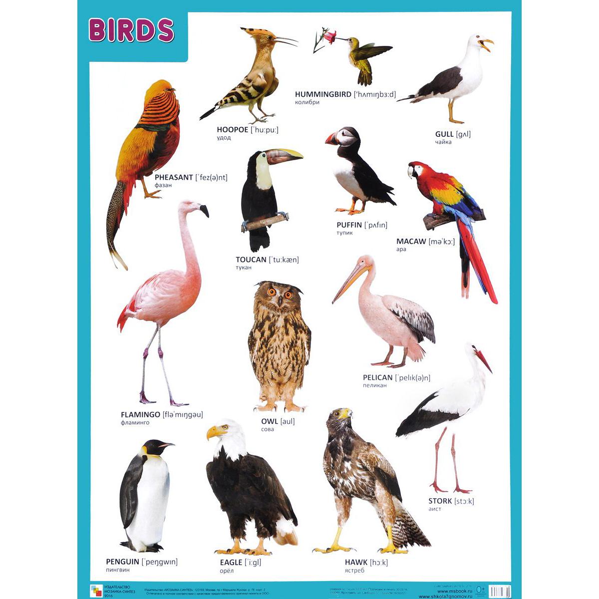 Плакат английский Birds - ПтицыАнглийский язык для детей<br>Плакат английский Birds - Птицы<br>