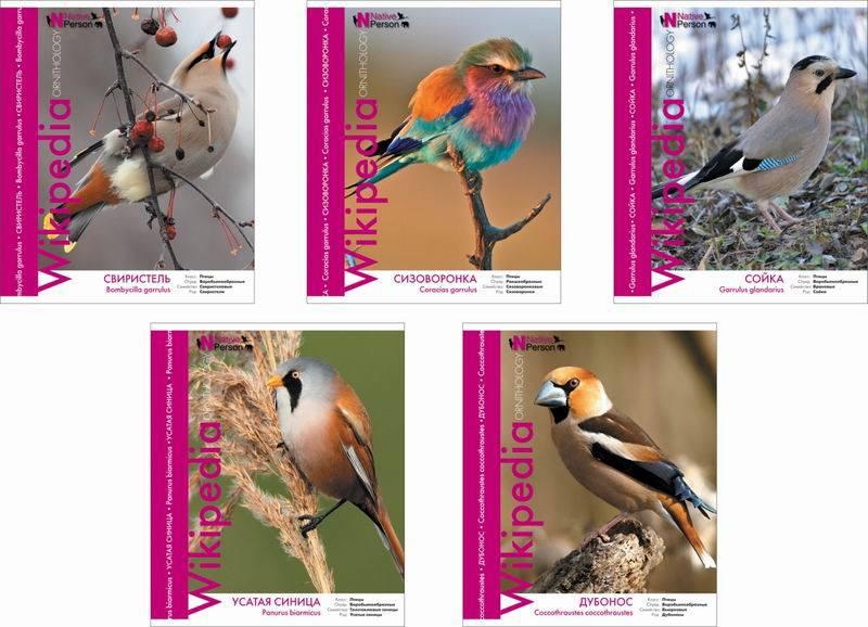 Ученическая тетрадь Wikipedia - Птицы, 48 листовТетради<br>Ученическая тетрадь Wikipedia - Птицы, 48 листов<br>