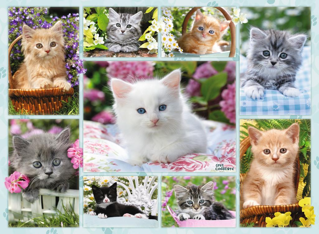 Паззл «Галерея котят» 500 штПазлы Ravensburger<br>Паззл «Галерея котят» 500 шт<br>