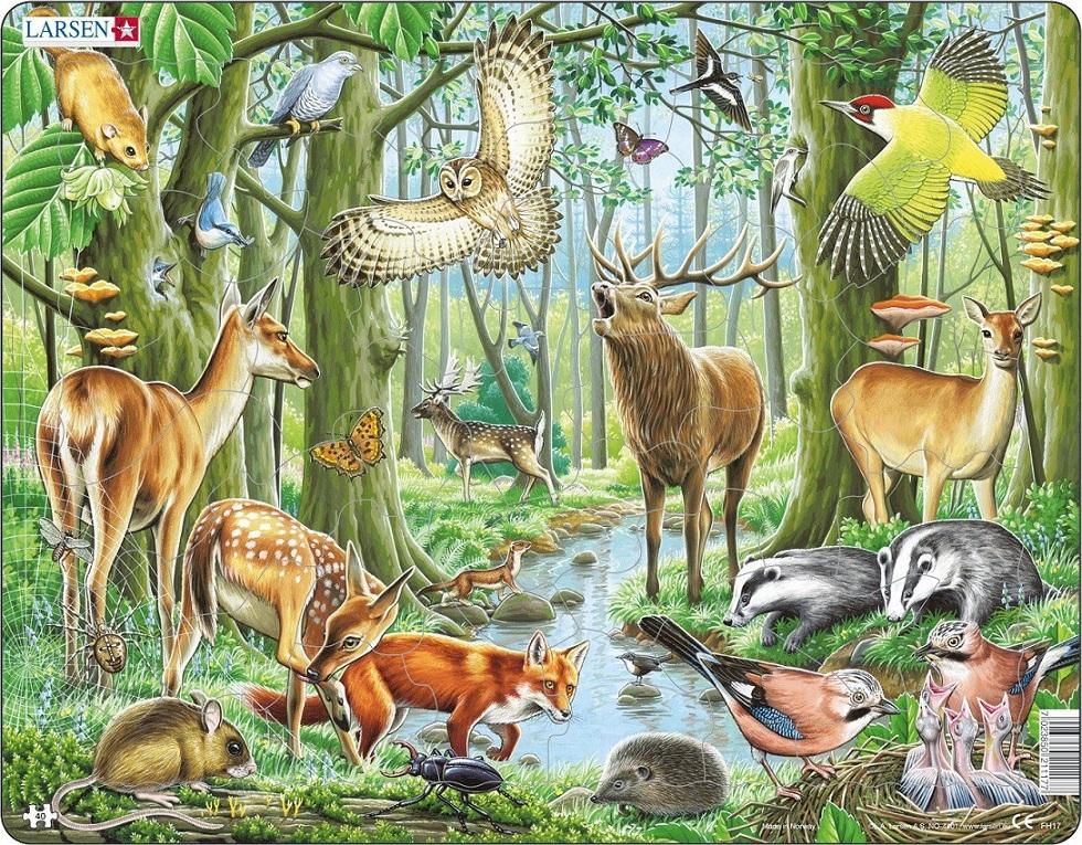 Купить Пазл - Европейский лес, 40 элементов, Larsen