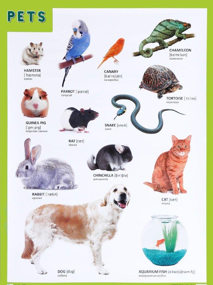 Плакат английский Pets - Домашние питомцыАнглийский язык для детей<br>Плакат английский Pets - Домашние питомцы<br>