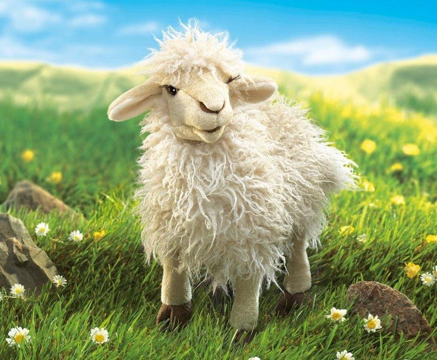 Открытка овечка фото, цветы