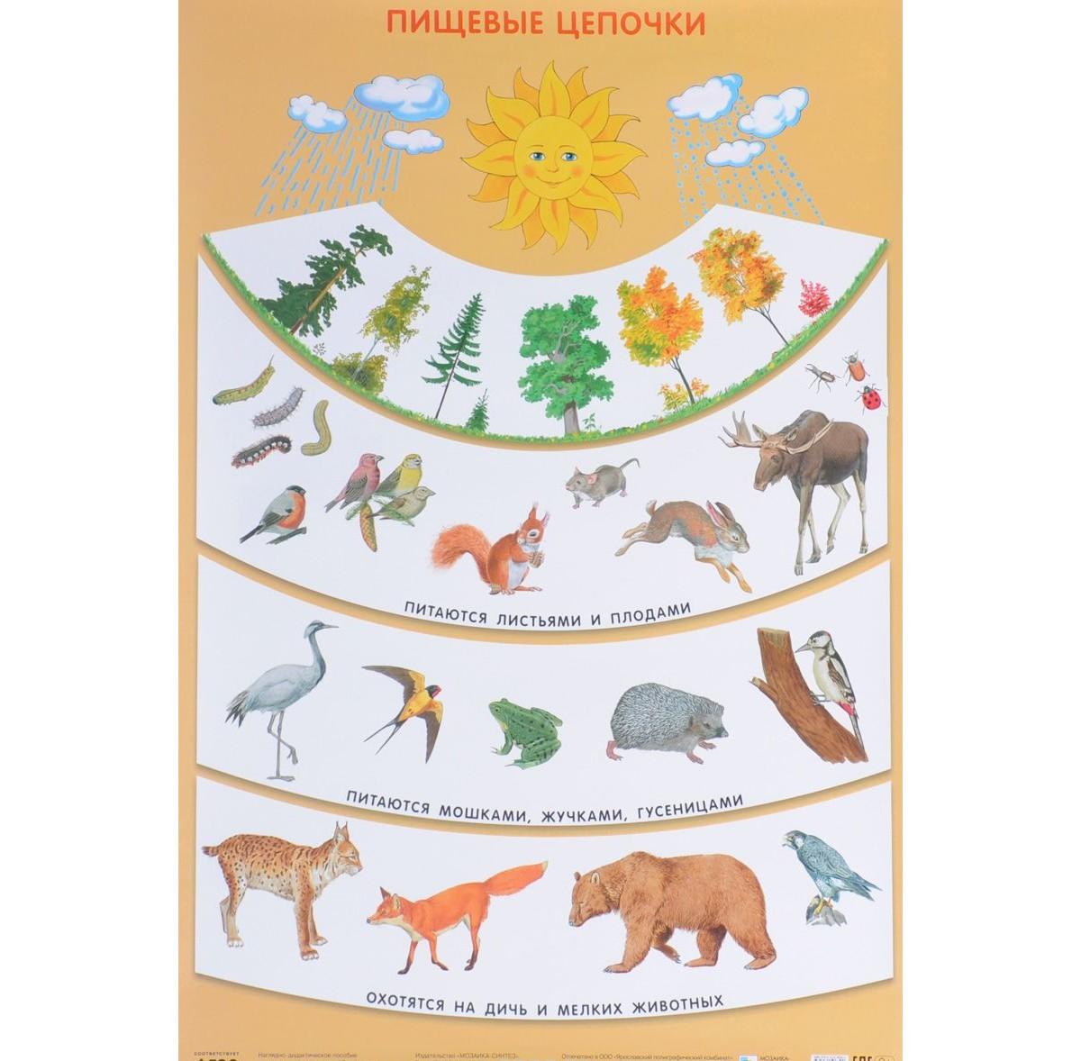 Плакат Николаева С. Н. - Пищевые цепочкиРазвивающие пособия и умные карточки<br>Плакат Николаева С. Н. - Пищевые цепочки<br>